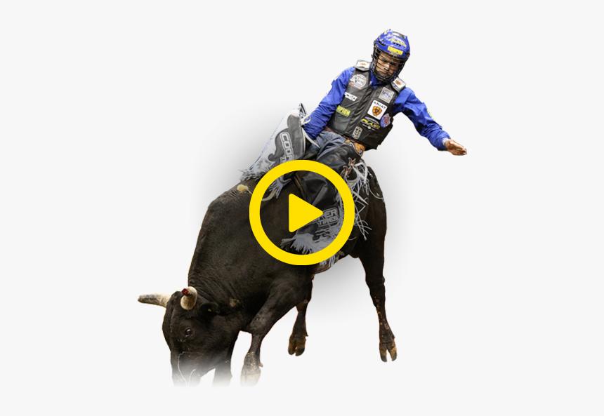 Water Buffalo, HD Png Download, Free Download