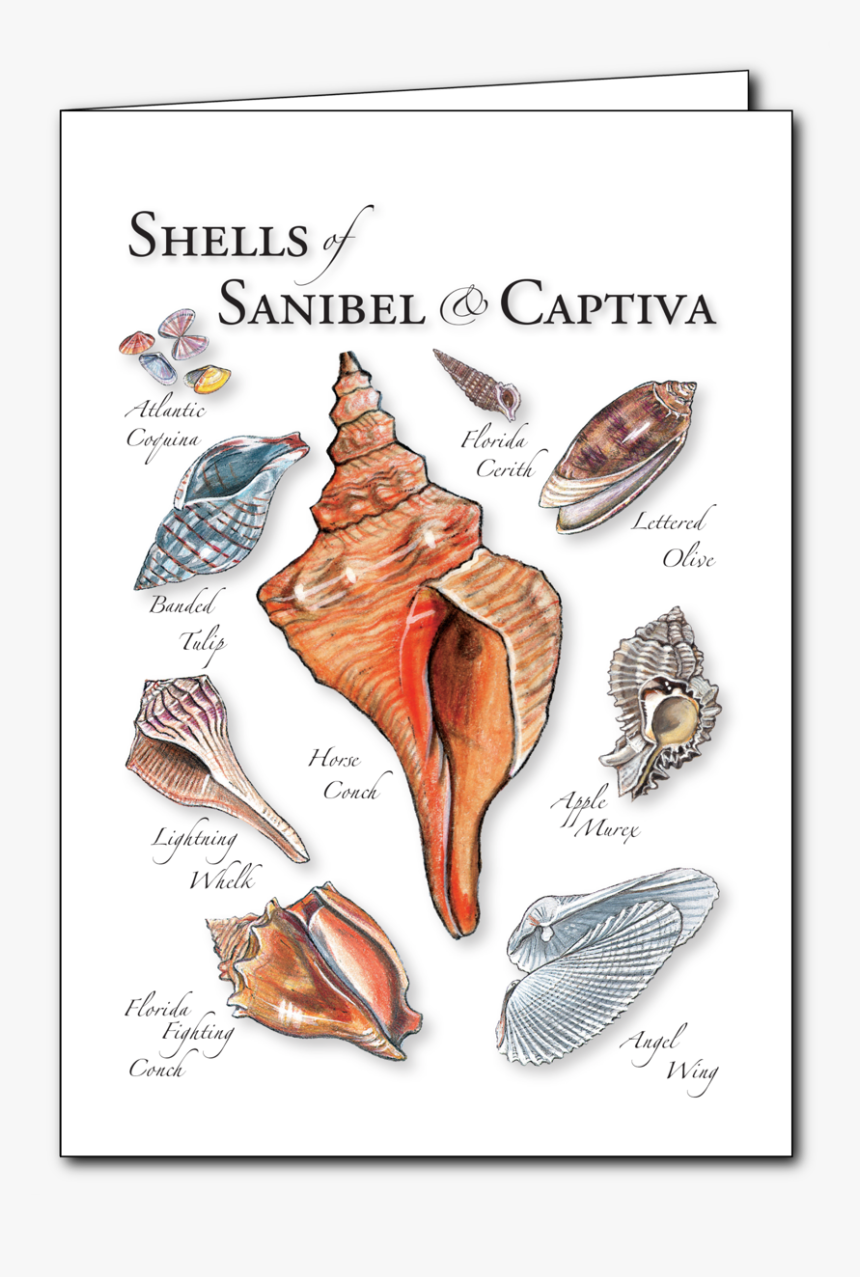 Conch, HD Png Download, Free Download