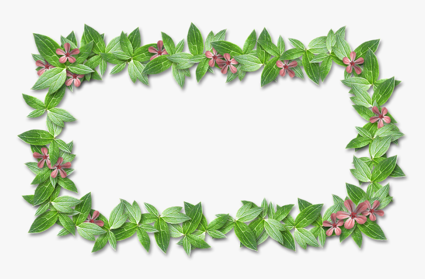 Scrapbooking, Frame, Green, Grass, Stand-alone, Leaves - 花草 框 素材, HD Png Download, Free Download