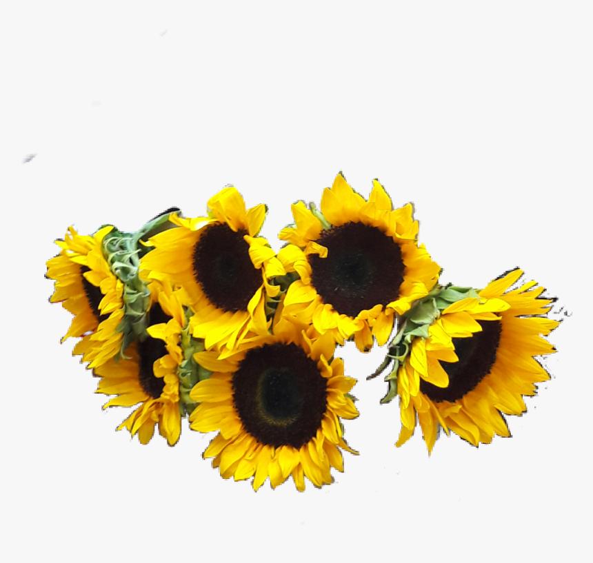 Girasoles Png , Png Download - Girasoles Png, Transparent Png, Free Download