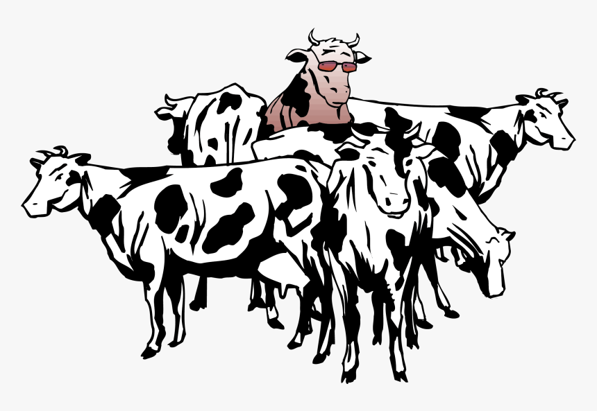 British White Cattle Beef Cattle Sheep Herd Clip Art, HD Png Download, Free Download