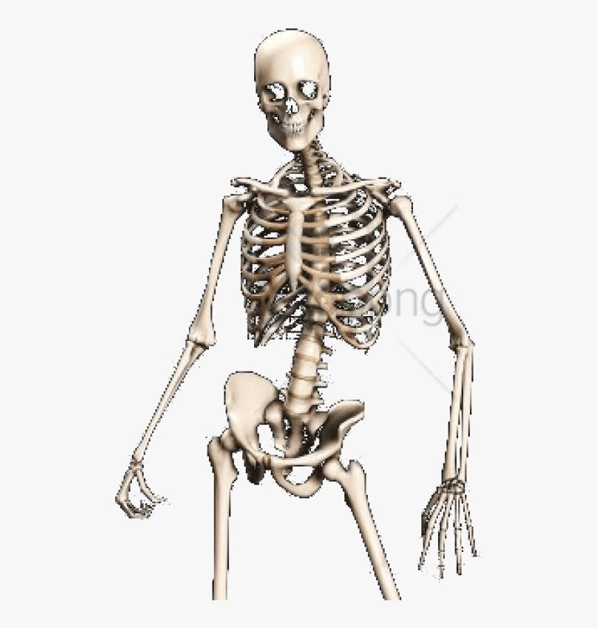 Skeleton,shoulder,human - Transparent Skeleton Png, Png Download, Free Download