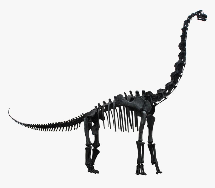 Dinosaur Skeleton Transparent Png, Png Download, Free Download