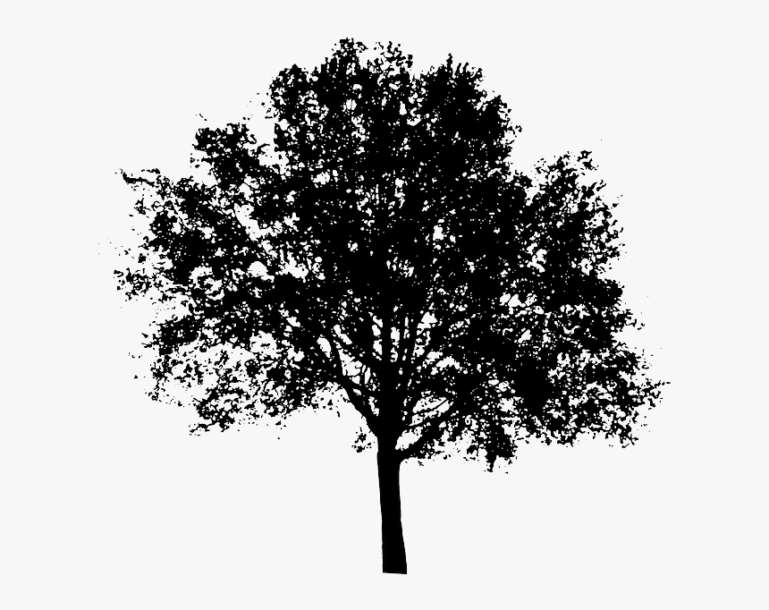 Black And White Trees Png Tree Silhouette Transparent Background Png Download Kindpng