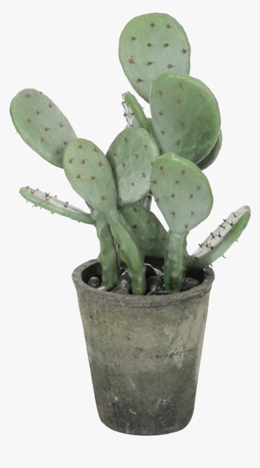 Aesthetic Cactus Png Transparent Png Kindpng