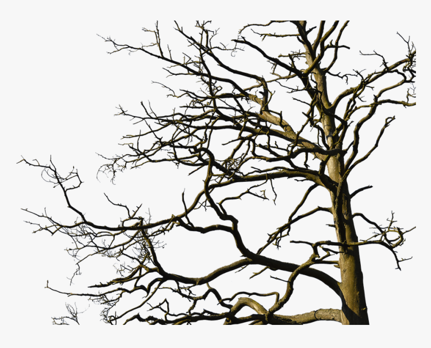 Tree, Aesthetic, Nature, Old Tree, Branches, Log, Bark - Old Tree With Branches, HD Png Download, Free Download