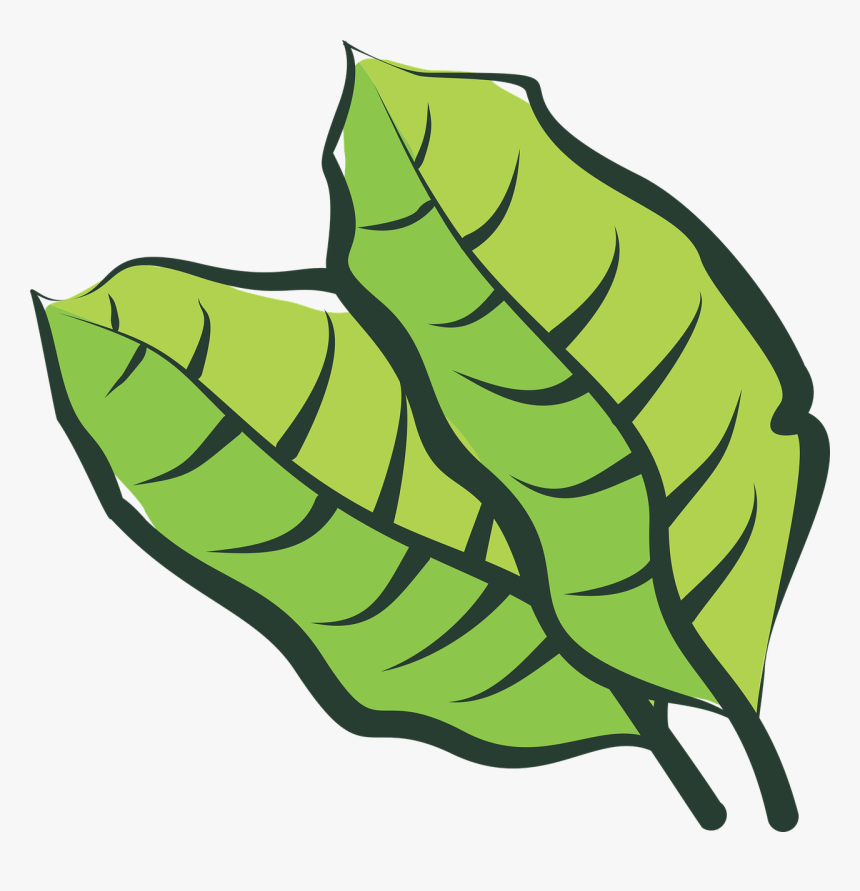 Hoja De Tabaco Png Vector , Png Download - Hoja De Tabaco Vector, Transparent Png, Free Download