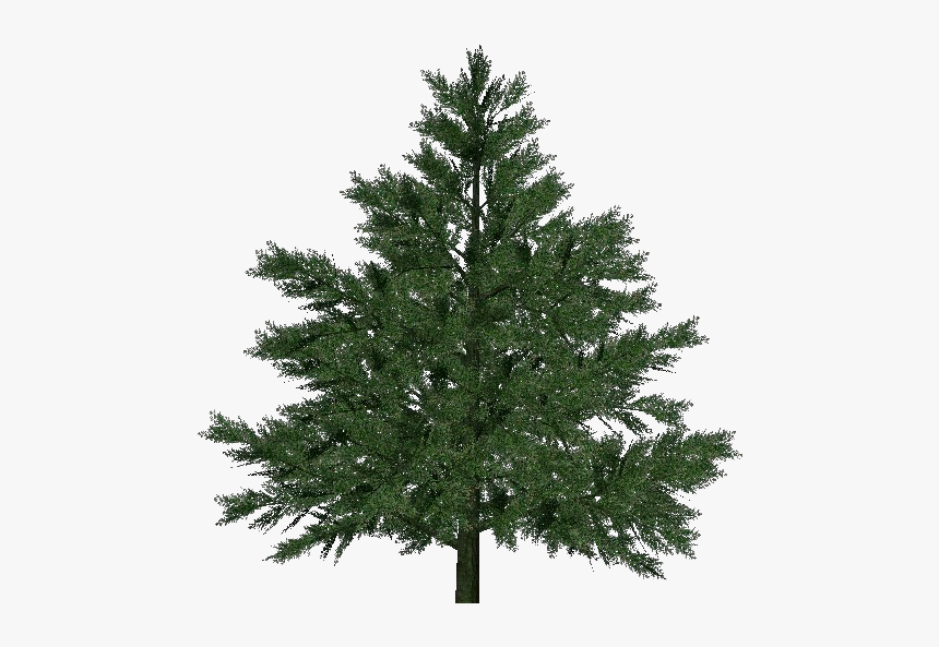 3d Trees - Pine - Acca Software - Free Fake Christmas Tree, HD Png Download, Free Download