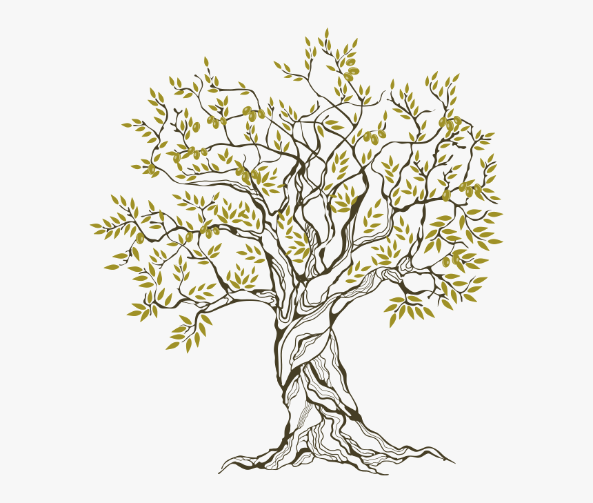 Olive-tree - Olive Tree Family Tree, HD Png Download, Free Download