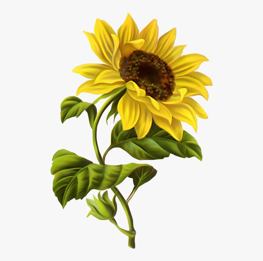 Cosas Para Photoscape Im U00c1genes Para Photoscape - Sunflower Drawing Transparent Background, HD Png Download, Free Download