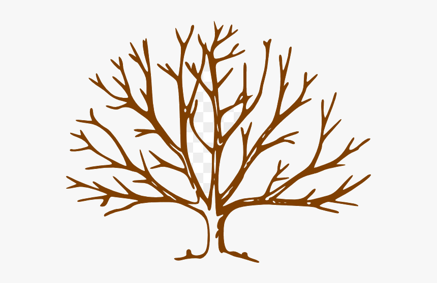 Fall Tree Free Content Website Plant Flower Transparent - Leave Less Tree Drawing, HD Png Download, Free Download