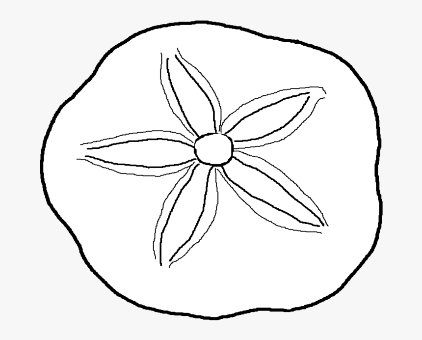 Sand Dollar Drawing Sand Dollar Coloring Pages Hd Png Download Kindpng