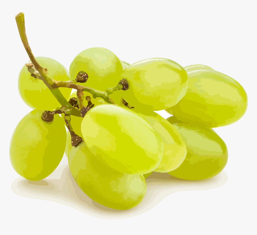 Seedless Fruit, HD Png Download, Free Download