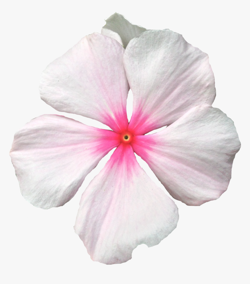 Transparent Flower Crown Png Background Png Download - Periwinkle, Png Download, Free Download