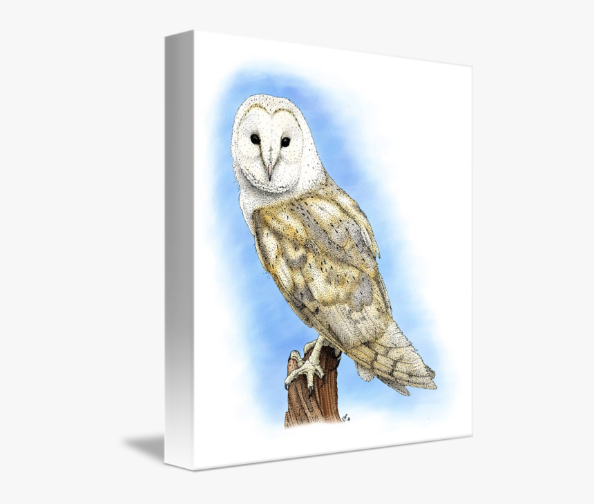 Clip Art By Roger Hall - Barn Owl Drawing, HD Png Download, Free Download
