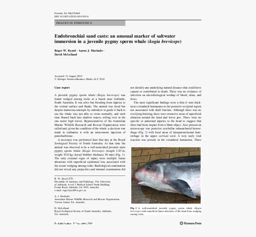 Harbour Porpoise, HD Png Download, Free Download