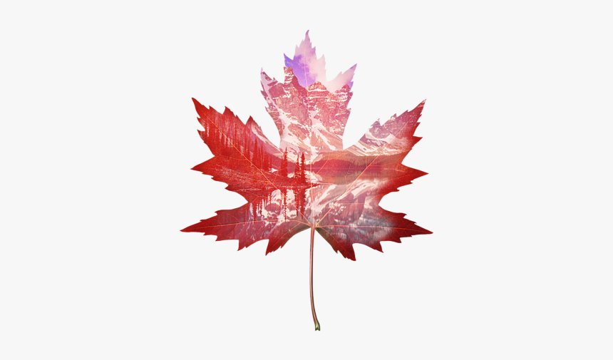 Red Maple Leaf Drawing Hd Png Download Kindpng