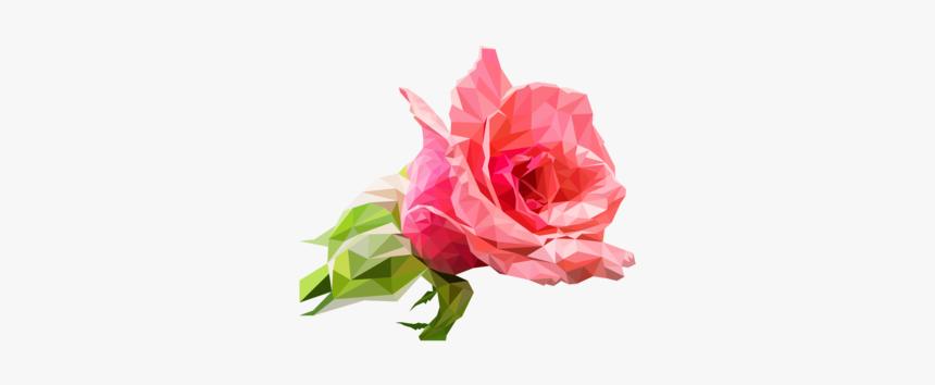 Pink,plant,flower - Garden Roses, HD Png Download, Free Download