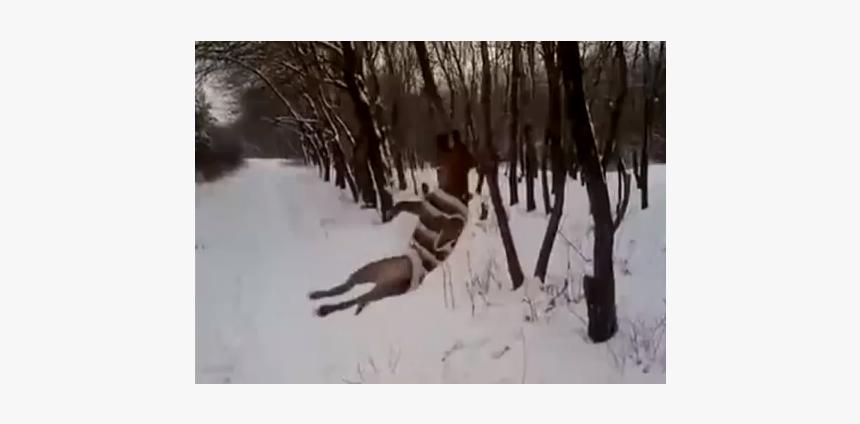 Un Pitbull Que Se Desvive Por Arrancar Una Rama De - Canada Goose, HD Png Download, Free Download