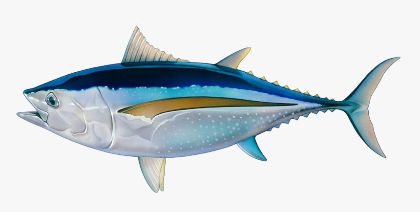 Transparent Cooked Fish Png Tuna Fish Png Png Download Kindpng