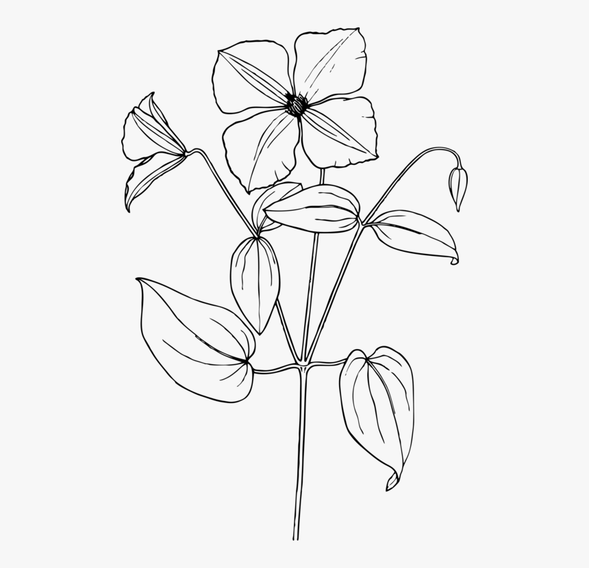 Trillium Drawing Flower Sampaguita Flower Drawing Easy Hd Png Download Kindpng