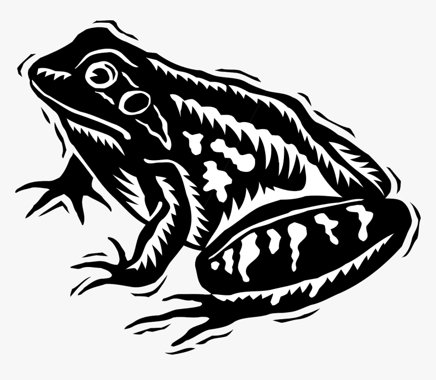 Black And White Frog Svg, HD Png Download, Free Download