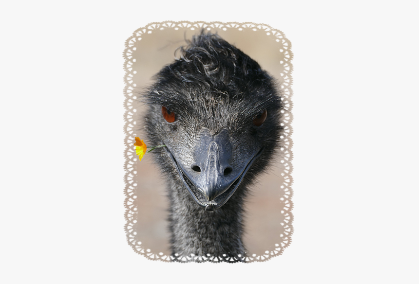 Emu, HD Png Download, Free Download