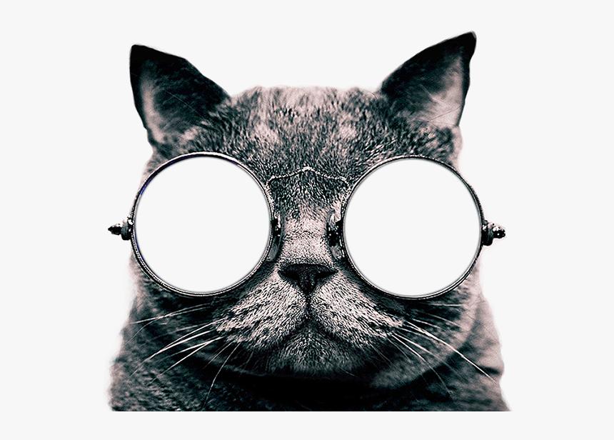 Cute Cat Wallpaper For Iphone Cute Cat Hd Png Download Kindpng