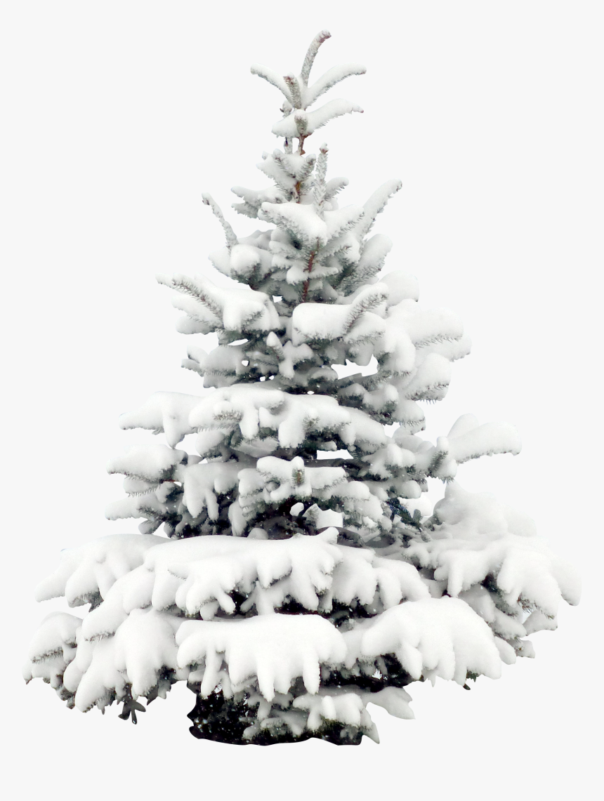 Transparent Pine Tree Clipart Black And White - Snowy Christmas Tree Png, Png Download, Free Download