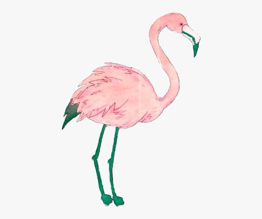 Flamingo - Png Flamingo, Transparent Png, Free Download