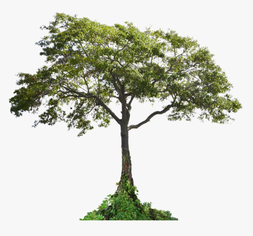 Cutout Tree - Tropical Tree Cut Out, HD Png Download, Free Download