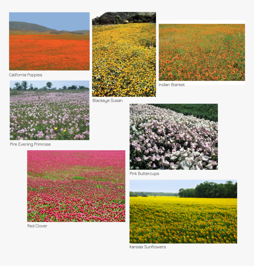 Field, HD Png Download, Free Download