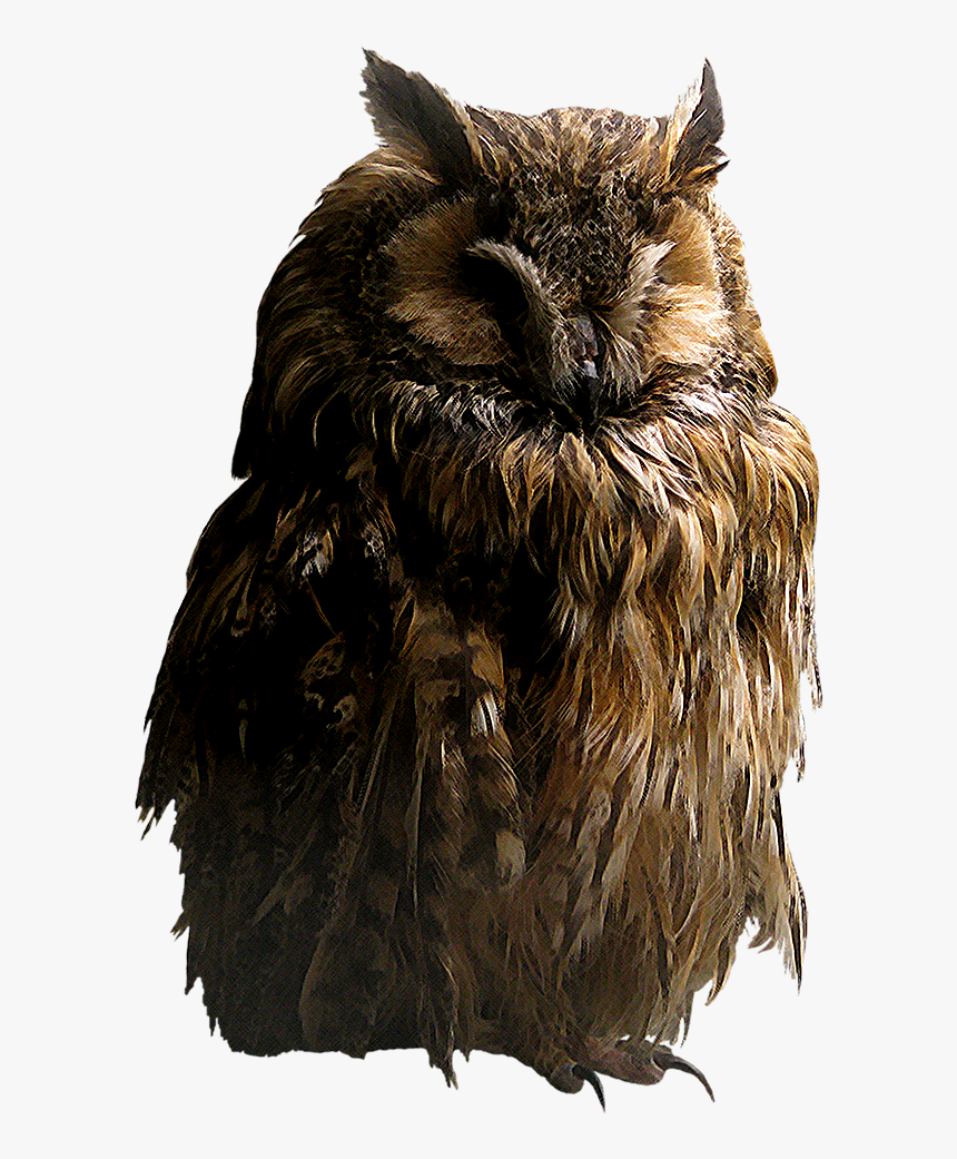 Owl Png - Owl Transparent Png, Png Download, Free Download