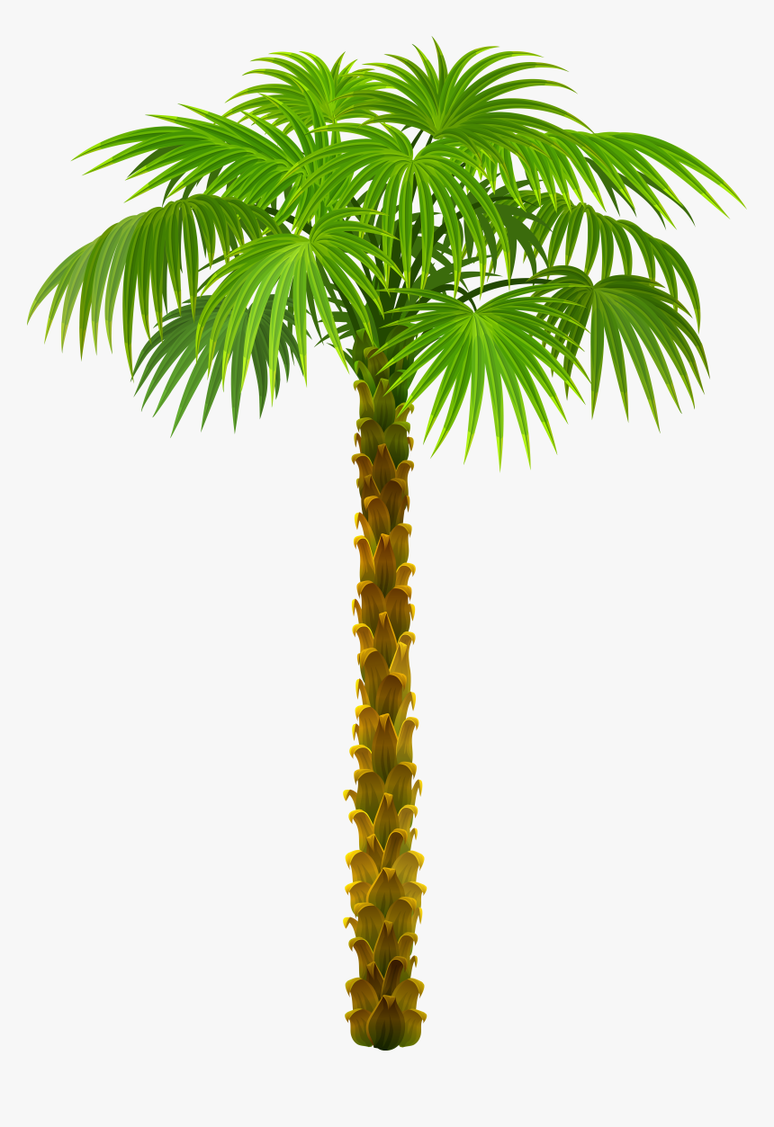 Tree Palm Trees Picture Download Hd Png Clipart, Transparent Png, Free Download