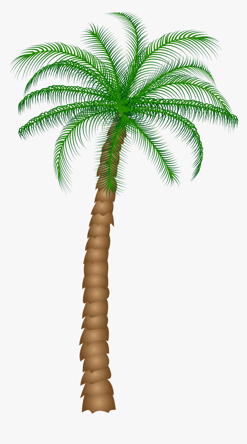 Date Palm Fruit Tree Clipart - Palm Tree Transparent Background, HD Png Download, Free Download