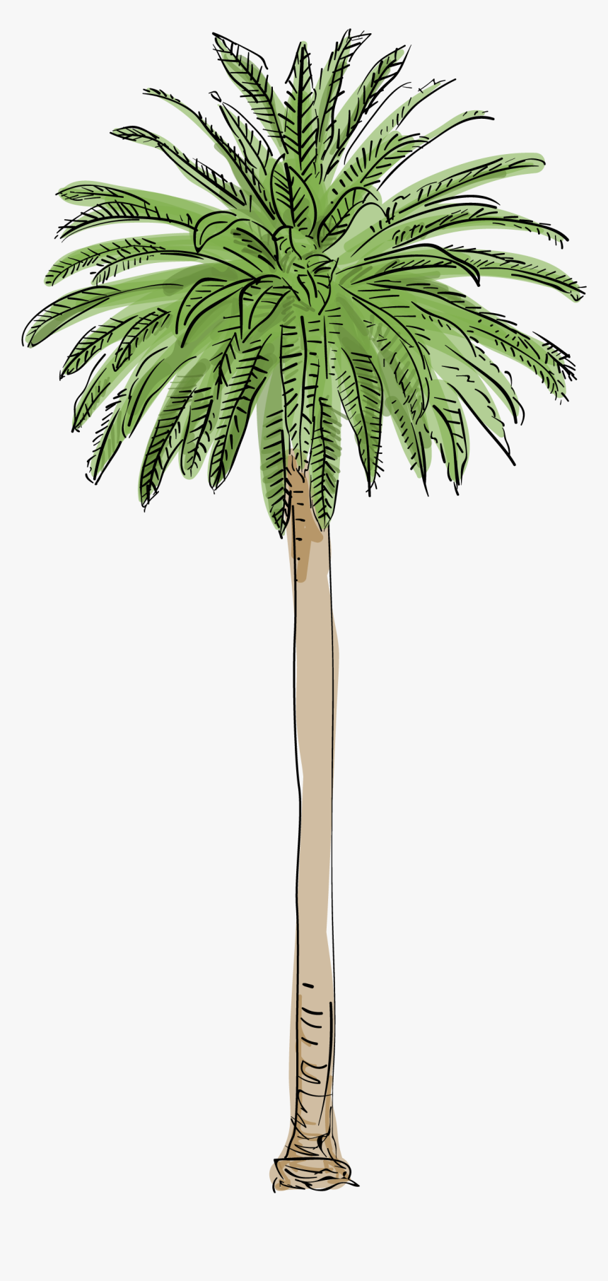 Canary Island Date Palm Png, Transparent Png, Free Download