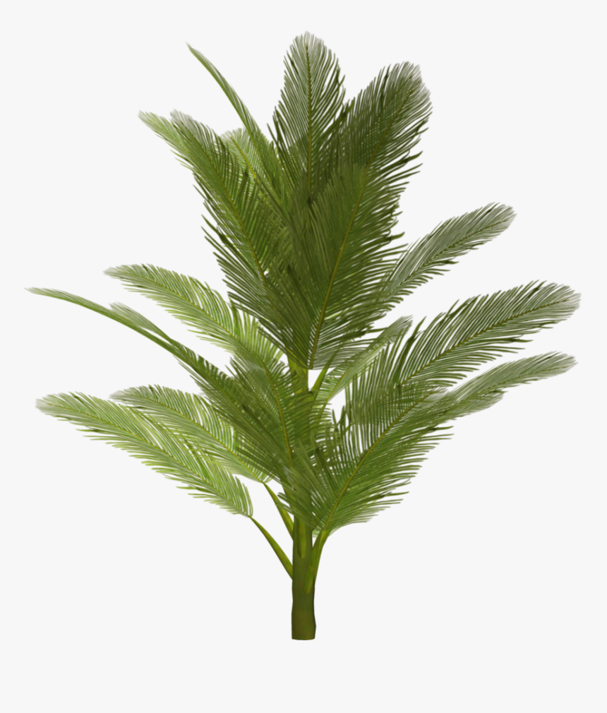 Palm Tree Png Image - Tree Png For Photoshop, Transparent Png, Free Download
