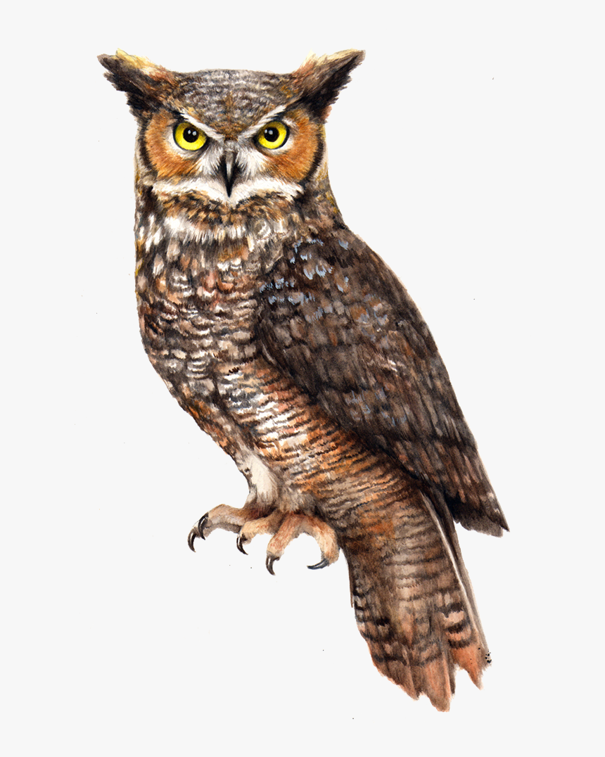 Owl Png File - Great Horned Owl Png, Transparent Png, Free Download