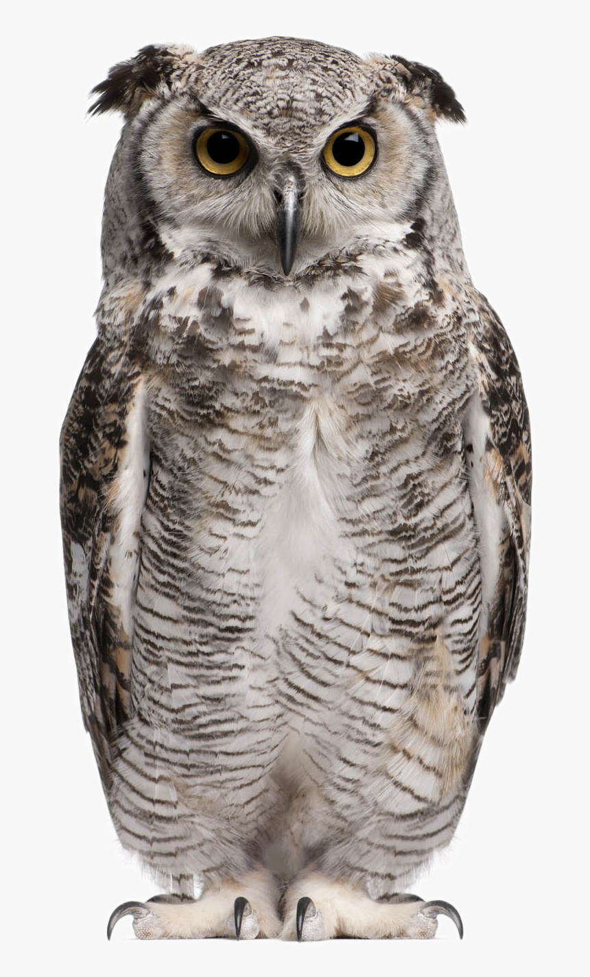 Owl Png Background Image - Great Horned Owl White Background, Transparent Png, Free Download