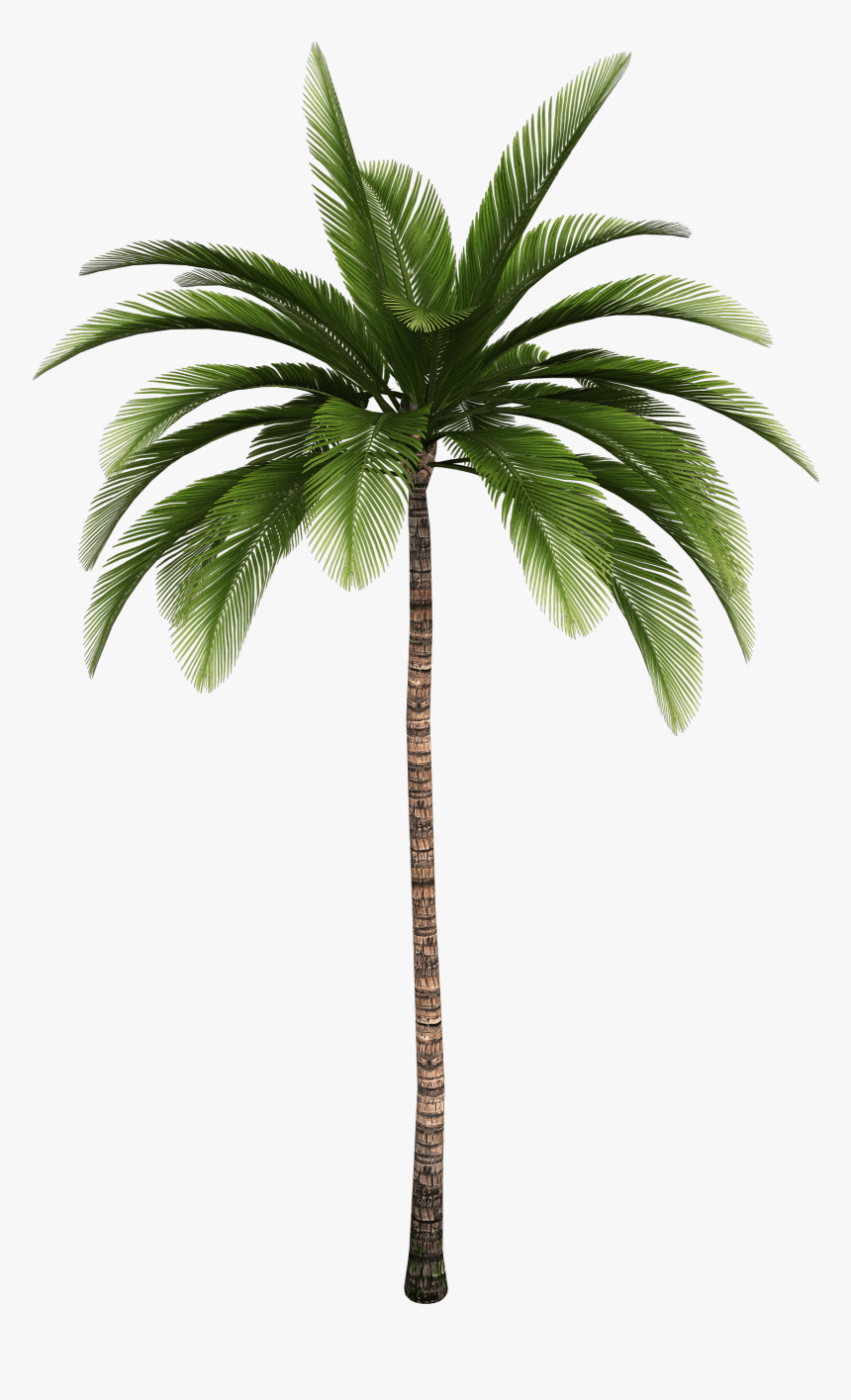 Clip Art Trees Coconut Babassu Free - Palm Tree High Resolution, HD Png Download, Free Download