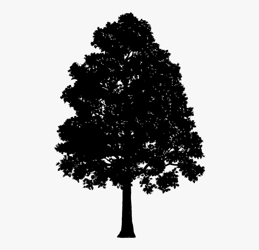 Transparent Oak Tree Clipart Tree Gif Transparent Background Hd Png Download Kindpng