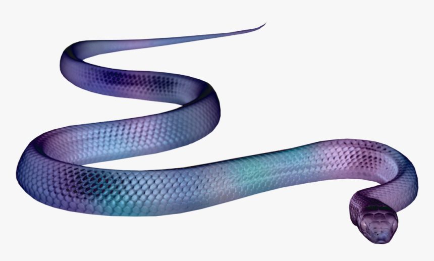 Snake Png Aesthetic, Transparent Png, Free Download