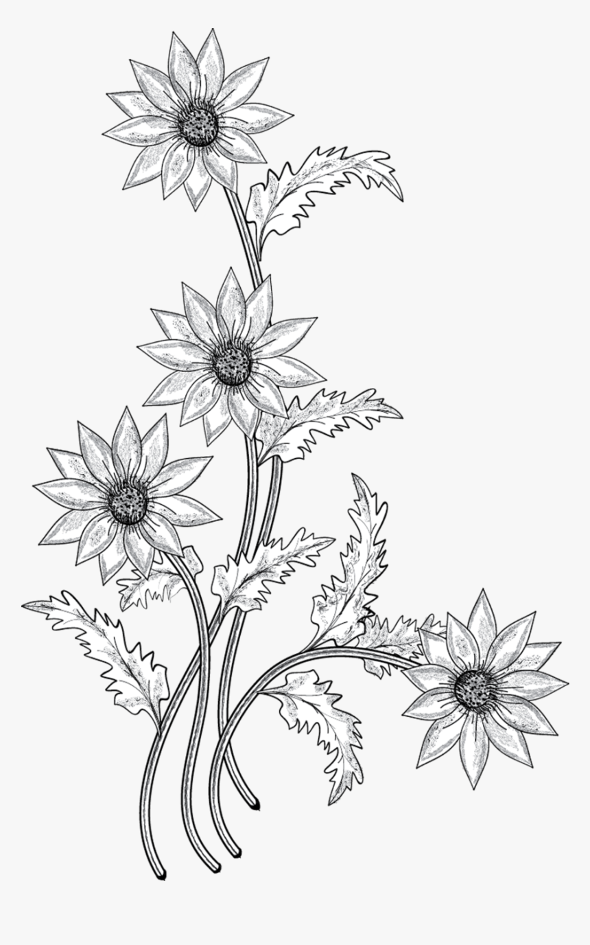 Flower Drawing Clip Art - White Png Flower Drawing, Transparent Png, Free Download