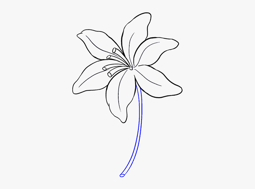 Lily Flower Drawing Easy Hd Png Download Kindpng