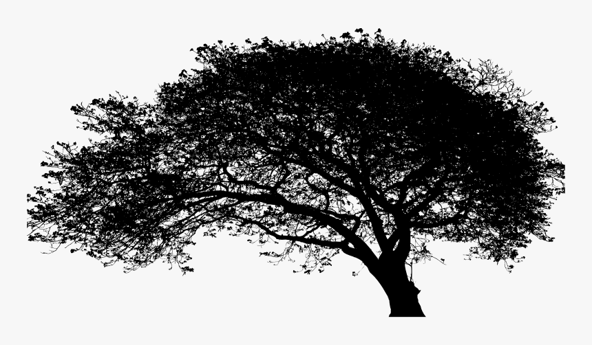 Large Expansive Tree Silhouette, HD Png Download, Free Download