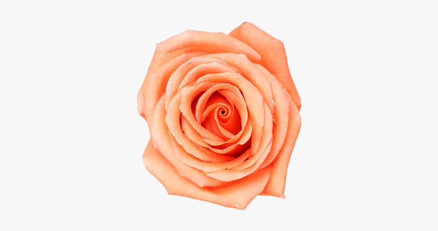 Aesthetic Flower Png, Transparent Png, Free Download