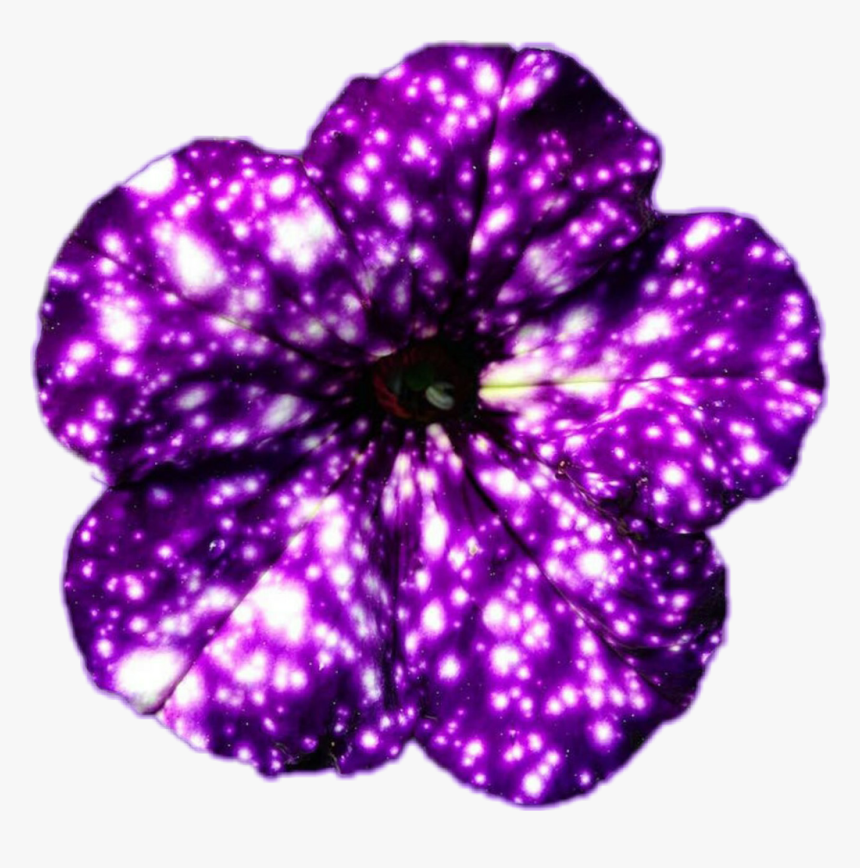 Galaxy Flowers, HD Png Download, Free Download