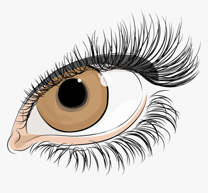 The Eye Of Women, Eyelashes, The Iris Of The Eye, Pupil - Lashes Eyes Transparent Background, HD Png Download, Free Download