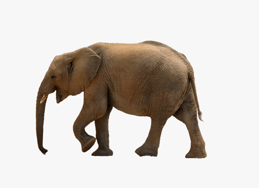 Baby Elephant Png, Transparent Png, Free Download