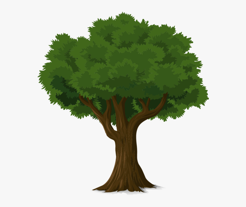 Clip Art Tree Fresh Arbres Page 10 Clipart Pinterest Hd Png Download Kindpng